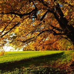 tree-779826_640