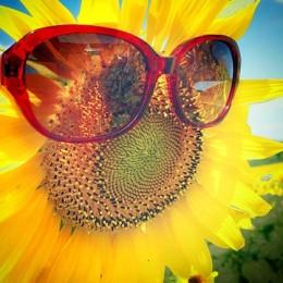 miss-sunflower-1063732_640