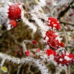 frost-3018057_640
