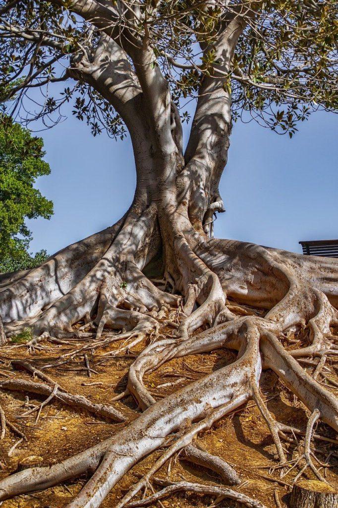 prvek Dřevo typologie osobnosti
